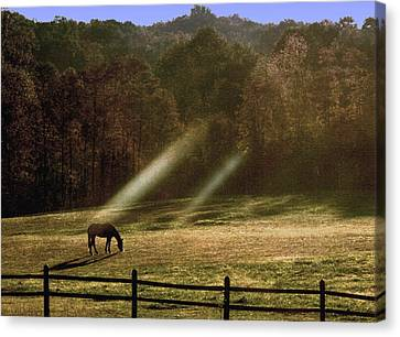 Canvas Print featuring the photograph Early Morning Grazing by Diane Merkle