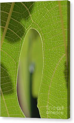 Early Morning Greens 1 Canvas Print