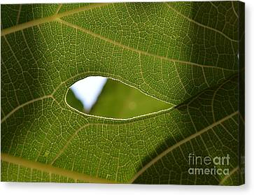 Early Morning Greens 2 Canvas Print