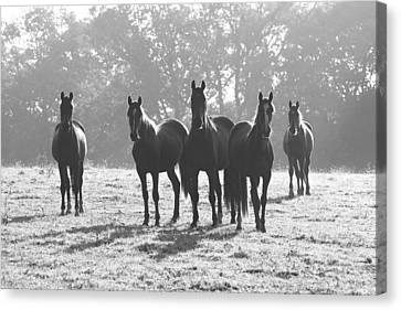 Early Morning Horses Canvas Print by Hazy Apple