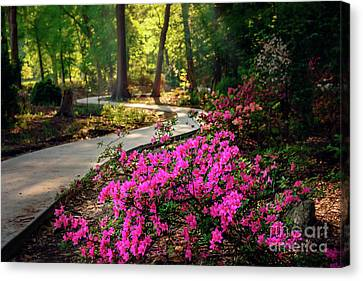 Canvas Print - Early Morning In Honor Heights Park by Tamyra Ayles