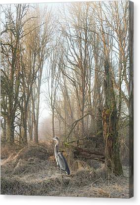 Canvas Print featuring the photograph Early Morning In The Backwoods by Angie Vogel