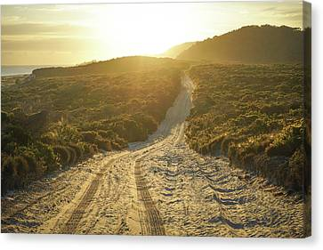 Early Morning Light On 4wd Sand Track Canvas Print
