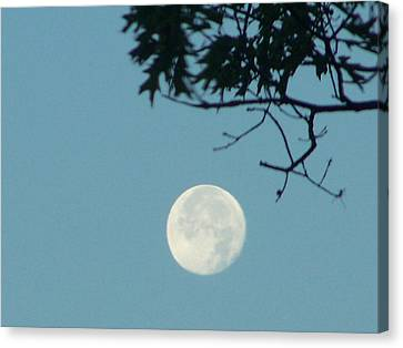 Early Morning Moon Canvas Print