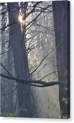 Early Morning Rays Canvas Print by Bill Cannon
