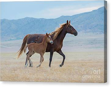 Early Morning Run Canvas Print by Nicole Markmann Nelson
