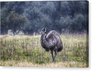 Early Morning Stroll Canvas Print by Douglas Barnard