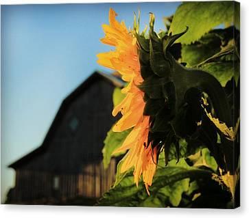 Canvas Print featuring the photograph Early One Morning by Chris Berry