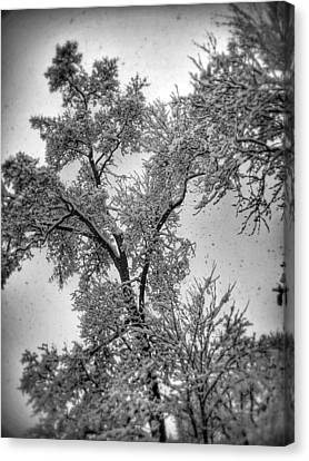 Canvas Print featuring the photograph Early Snow by Steven Huszar