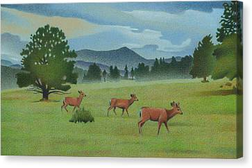 Early Spring Evergreen Canvas Print