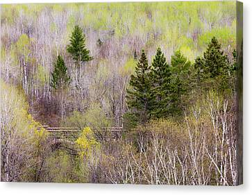 Early Spring Canvas Print - Early Spring Palette by Mary Amerman