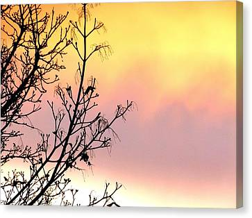 Early Spring Sunset Canvas Print by Will Borden