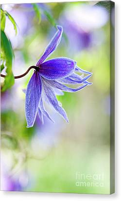 Early Springs Blues Canvas Print by Tim Gainey