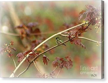 Early Summer Hummer Canvas Print by Barbara S Nickerson