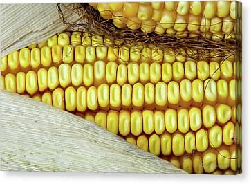 Ears Of Corn #2 Canvas Print