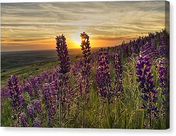 Earth Laughs In Flowers Canvas Print by Mark Kiver