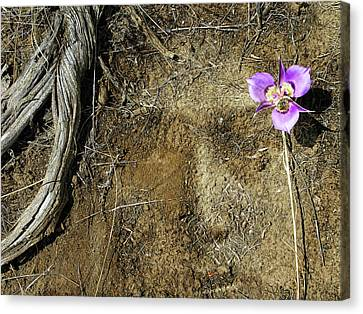Canvas Print featuring the photograph Earth Memories-desert Flower # 1 by Ed Hall