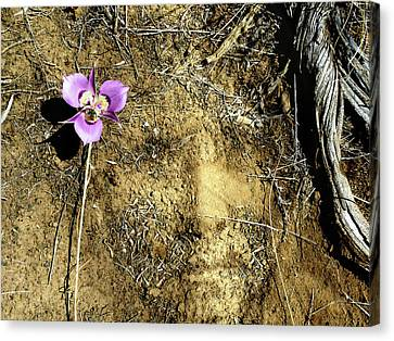 Canvas Print featuring the photograph Earth Memories - Desert Flower # 2 by Ed Hall