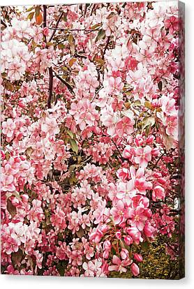 Earth Tones Apple Blossoms  Canvas Print