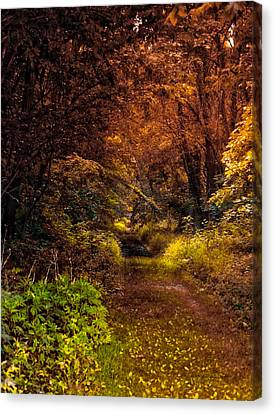 Earth Tones In A Illinois Woods Canvas Print by Thomas Woolworth