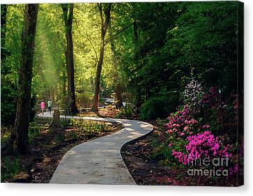 Earyl Morning Walk Through Honor Heights Park Canvas Print by Tamyra Ayles
