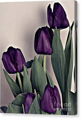 A Display Of Tulips Canvas Print