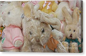 Canvas Print featuring the photograph Easter Bunnies by Benanne Stiens