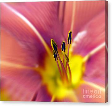 Easter Lily 3 Canvas Print by Tony Cordoza