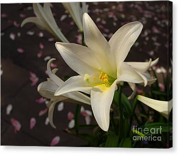 Easter Lily Canvas Print by Dorothy Lee