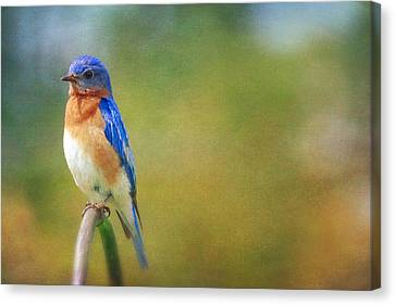Canvas Print featuring the photograph Eastern Bluebird Painted Effect by Heidi Hermes
