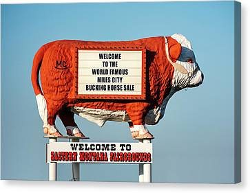 Eastern Montana Fairgrounds Cow Canvas Print by Todd Klassy