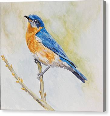 Canvas Print featuring the painting Eastern Mountain Bluebird by Robert Decker