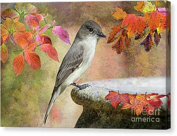 Eastern Phoebe In Autumn Canvas Print by Bonnie Barry