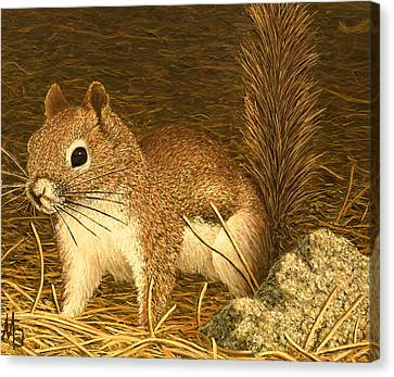 Eastern Pine Squirrel Canvas Print