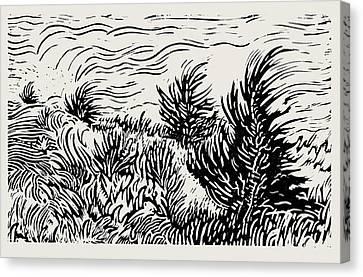 Eastern Red Cedar Canvas Print