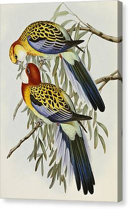 Eastern Rosella Canvas Print by John Gould