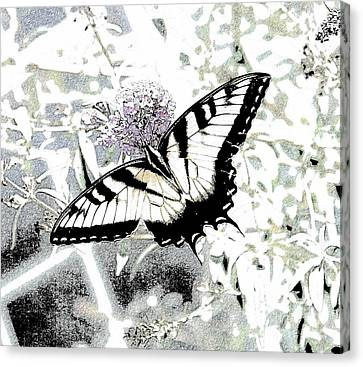 Eastern Tiger Swallowtail Butterfly - Bleached Abstract  Canvas Print by Scott D Van Osdol