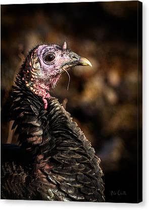 Eastern Wild Turkey Canvas Print by Bob Orsillo