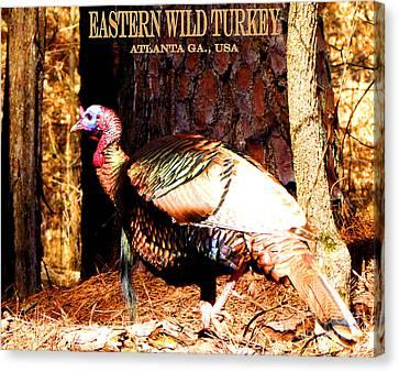 Eastern Wild Turkey Canvas Print by Gardening Perfection
