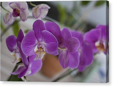 Eat More Orchids Canvas Print by Kevin  Sherf