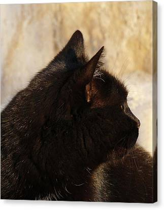 Ebony-series  - Posing  Canvas Print by Explorer Lenses Photography