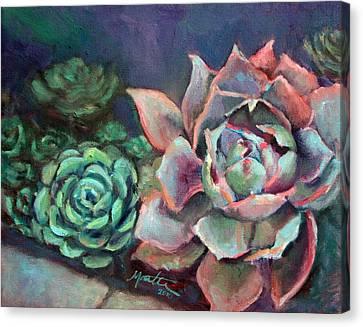 Succulent Canvas Print - Echeveria by Athena  Mantle