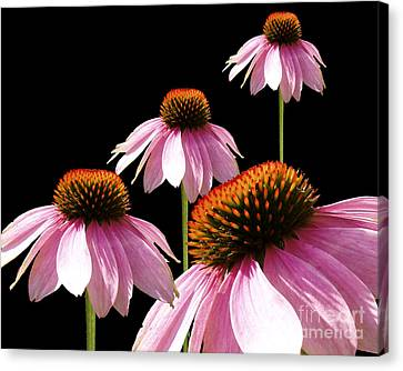 Echinacea In Half  Canvas Print by Cathy  Beharriell