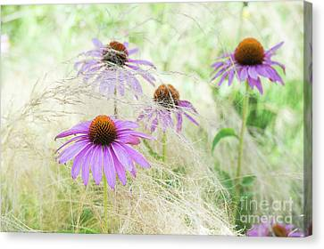 Echinacea In The Grass Canvas Print by Tim Gainey
