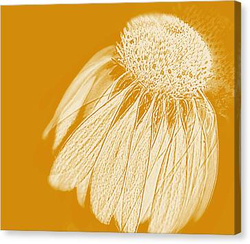Echinacea Canvas Print by Linde Townsend