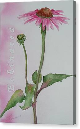 Echinacea Canvas Print by Ruth Kamenev