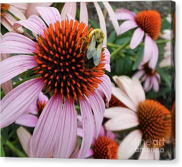 Echinacea Tea Time For Bee Canvas Print