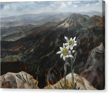 Edelweiss Moment Canvas Print