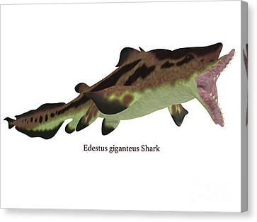 Edestus Shark Jaws Canvas Print