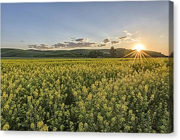 Edge Of Daytime Canvas Print by Jon Glaser